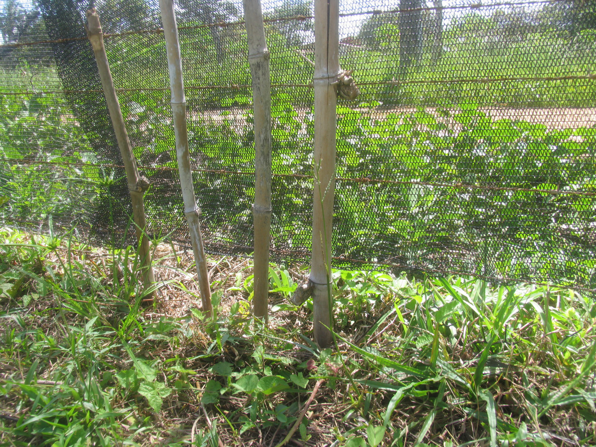 Bamboo sticks and wire fence