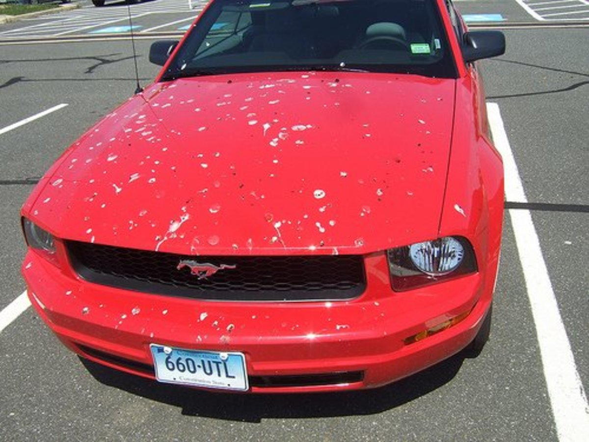 Study shows red cars are birds' first choice.
