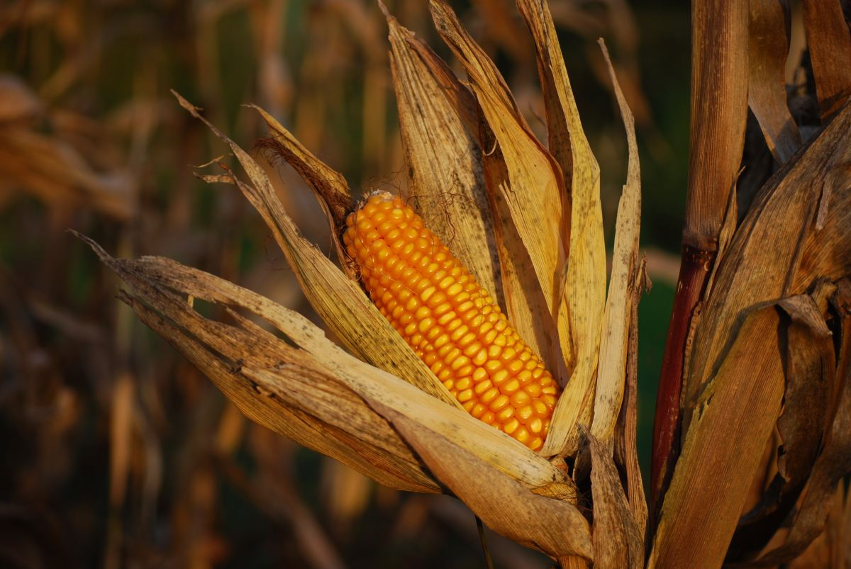 Bio-ethanol derives from corn, making it a environmentally friendly option.