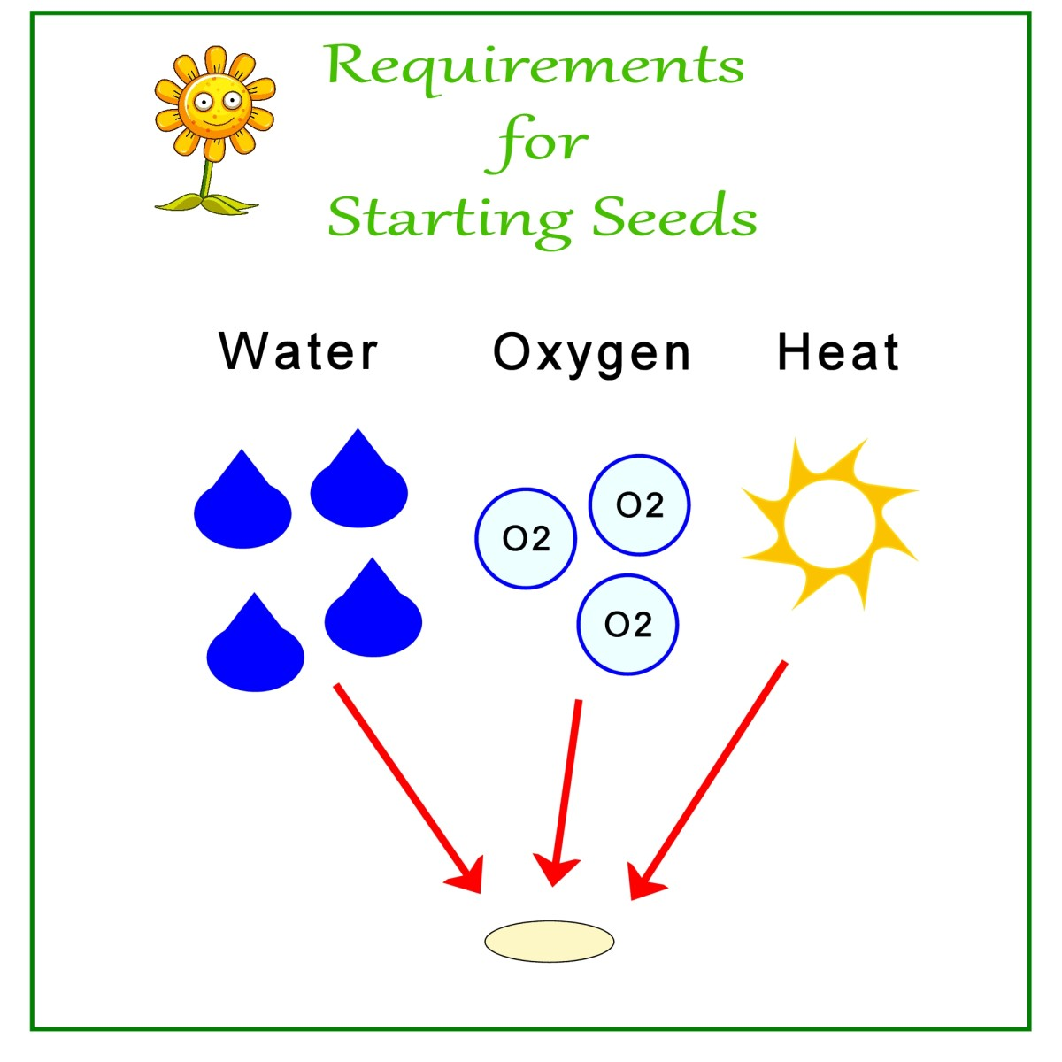 Requirements for seed germination.