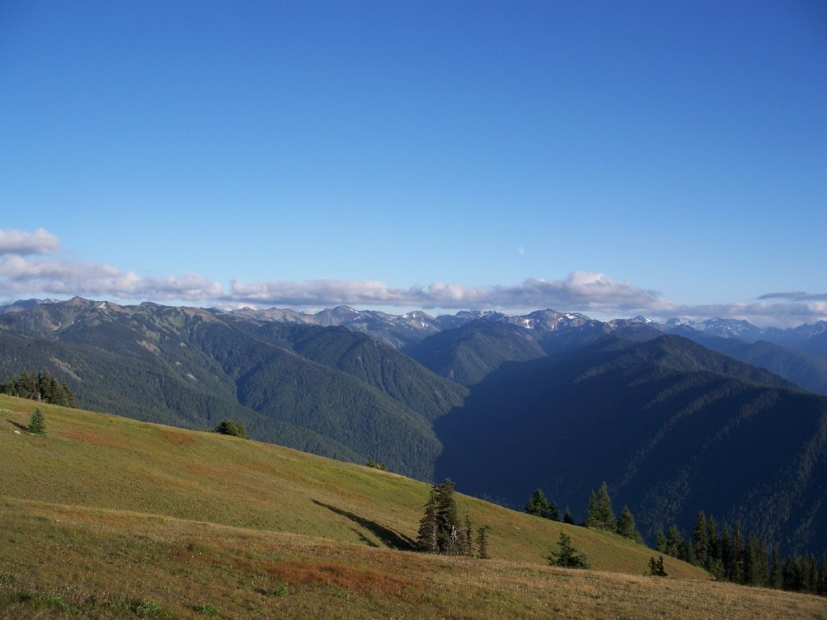 Hurricane Ridge.  Olympic National Park, Washington.
