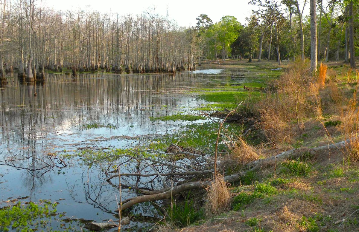 View from Magnolia Ridge Core of Engineers campground in the Big Thicket of Texas.