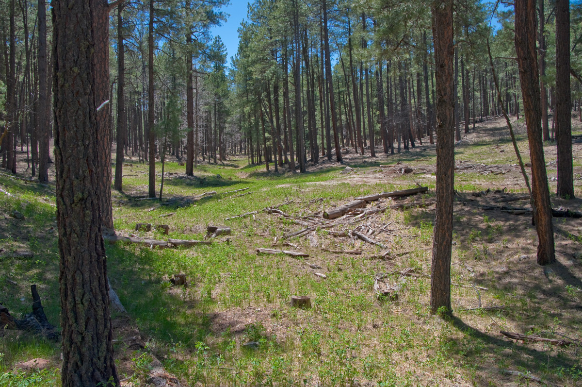 Cool forest near Flagstaff, a great place to not think about the A/C.
