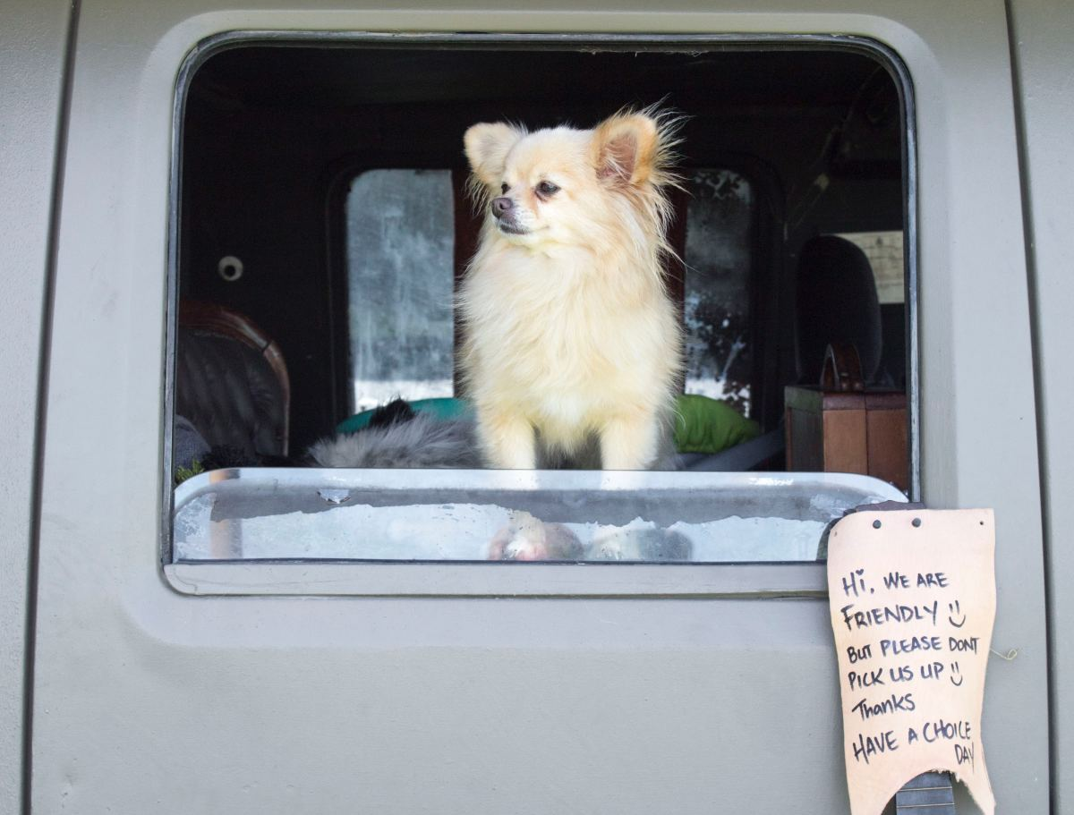 While some people do successfully live full-time with small, docile dogs, in nine cases out of ten, pets are not congruent with RV living.