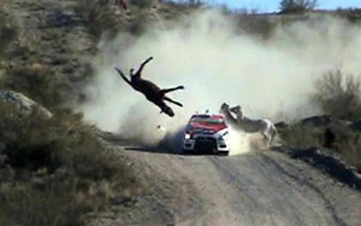 Horse dies in a rally crash in Argentina.