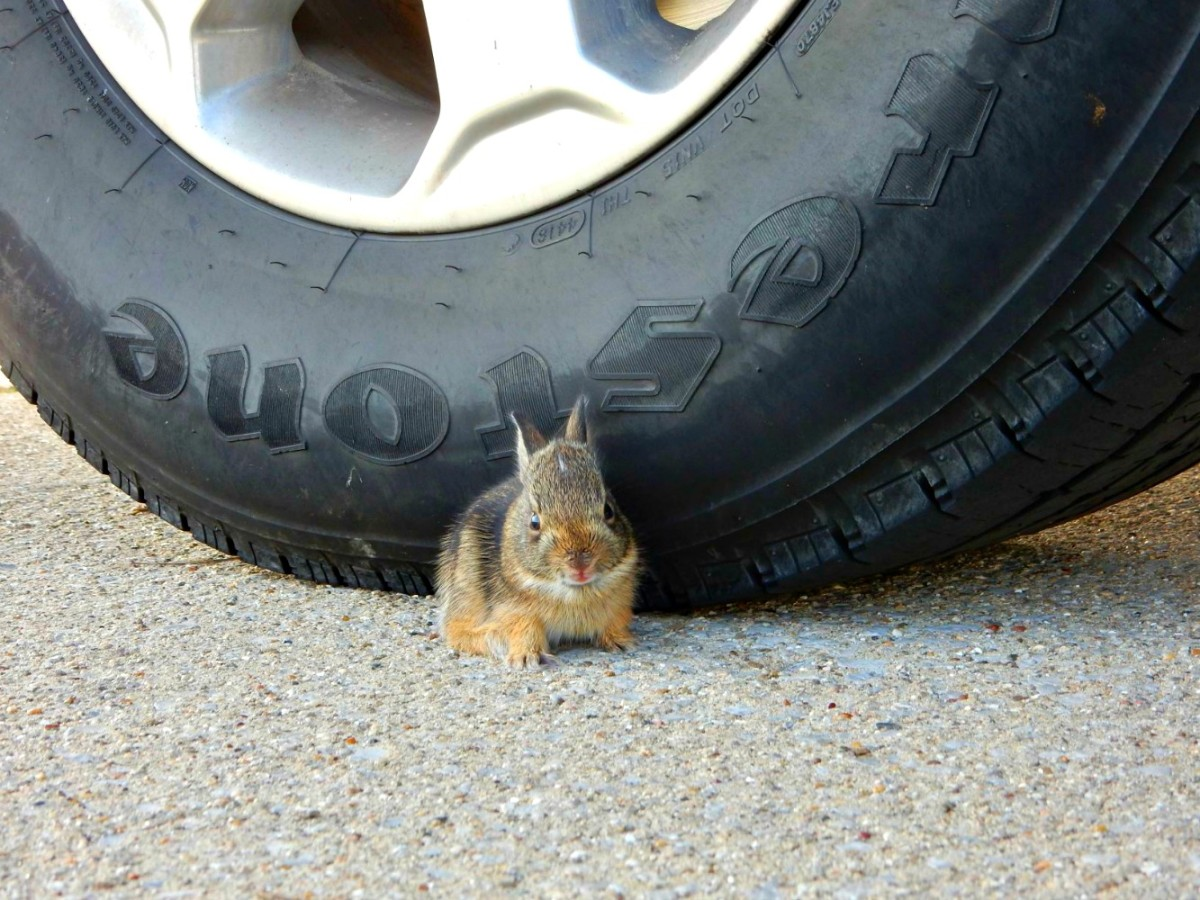 Learn to enjoy the little things you see along the way and your RV trips will vastly improve.