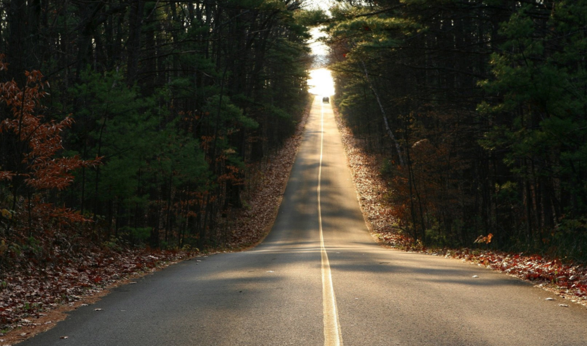 The closer the woodline comes to the road, the greater the chance of a deer/car collision.
