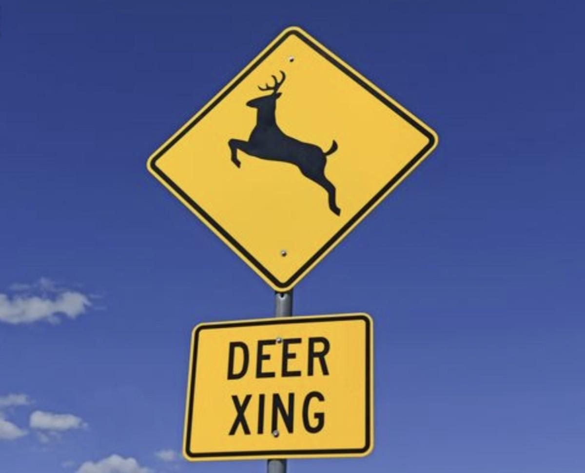 """""""Deer crossing"""" signs mark high traffic areas for deer."""