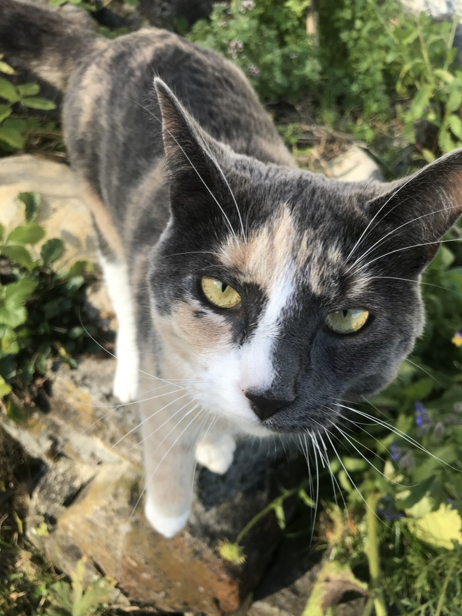 How To Get Rid Of Cat Urine Odour Dengarden