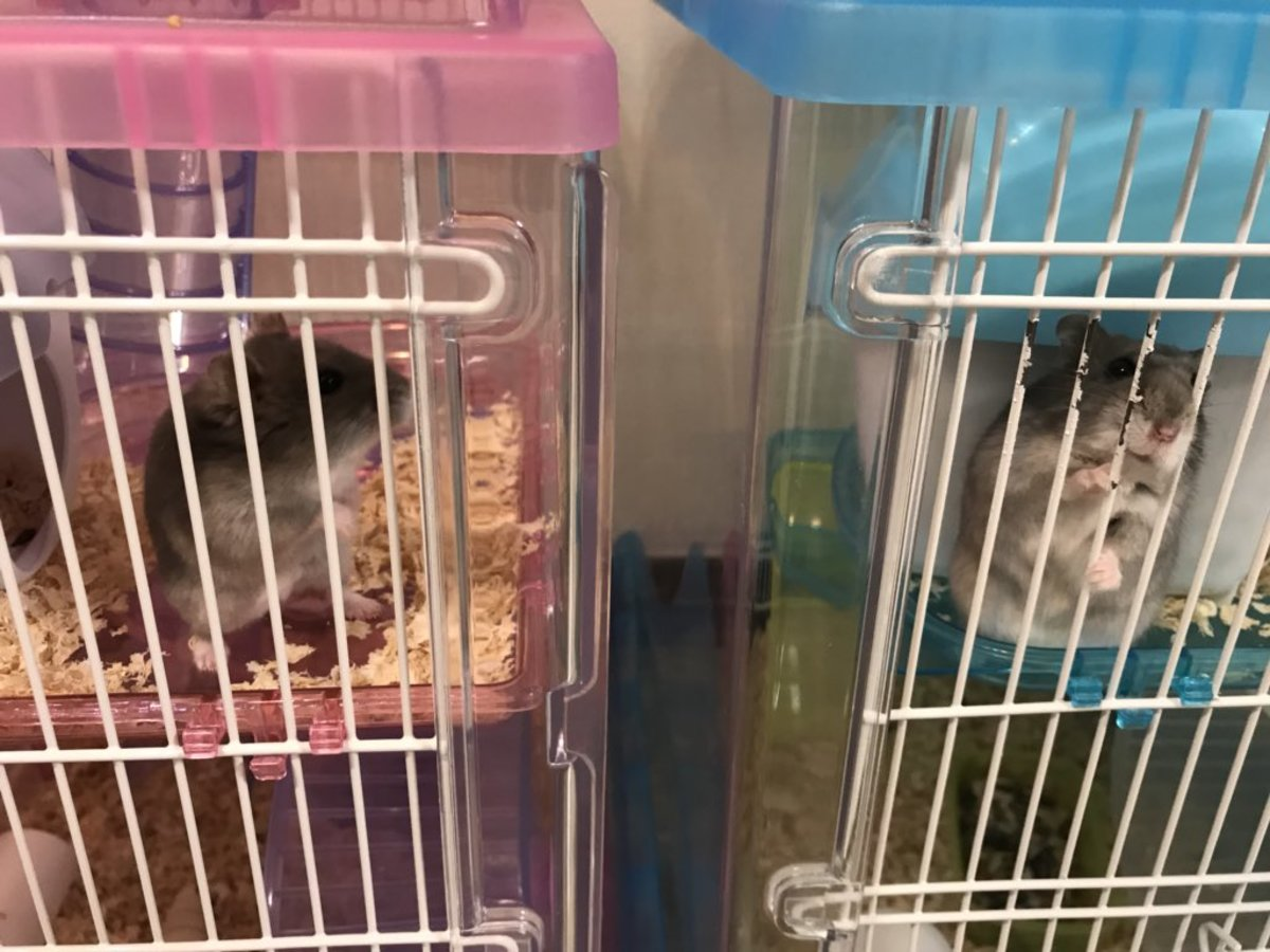 Zelda and Hemingway in their cages