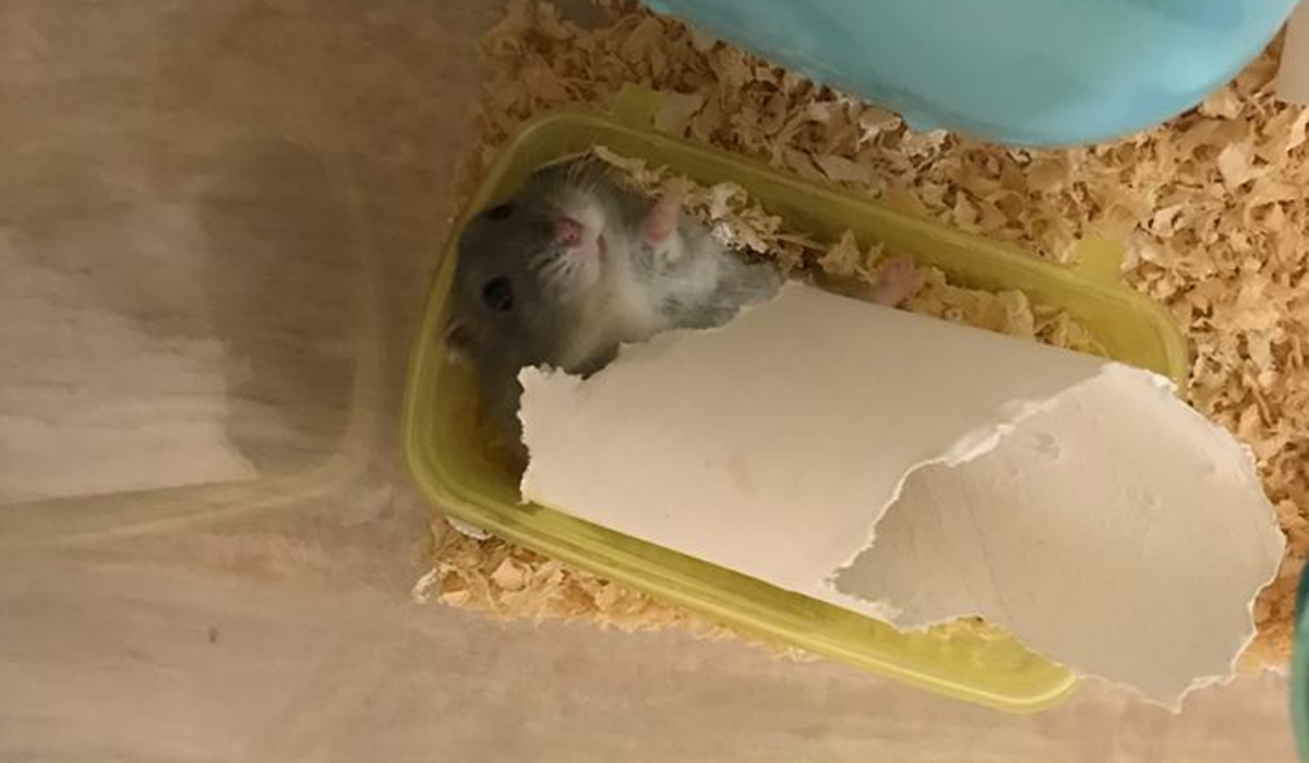 how-to-get-your-hamster-to-trust-you