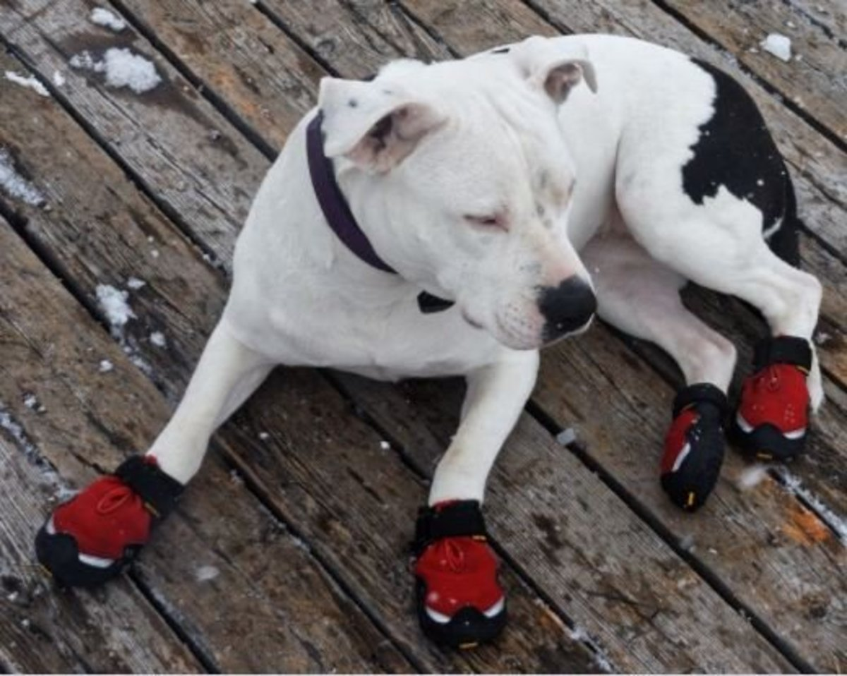 Some dog boots meant to keep old dogs from slipping may be used outdoors, too.