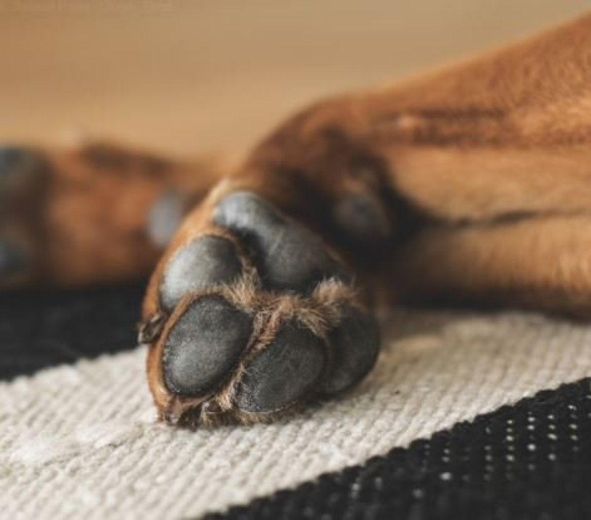 Keep nails short to prevent incorrect paw placement.
