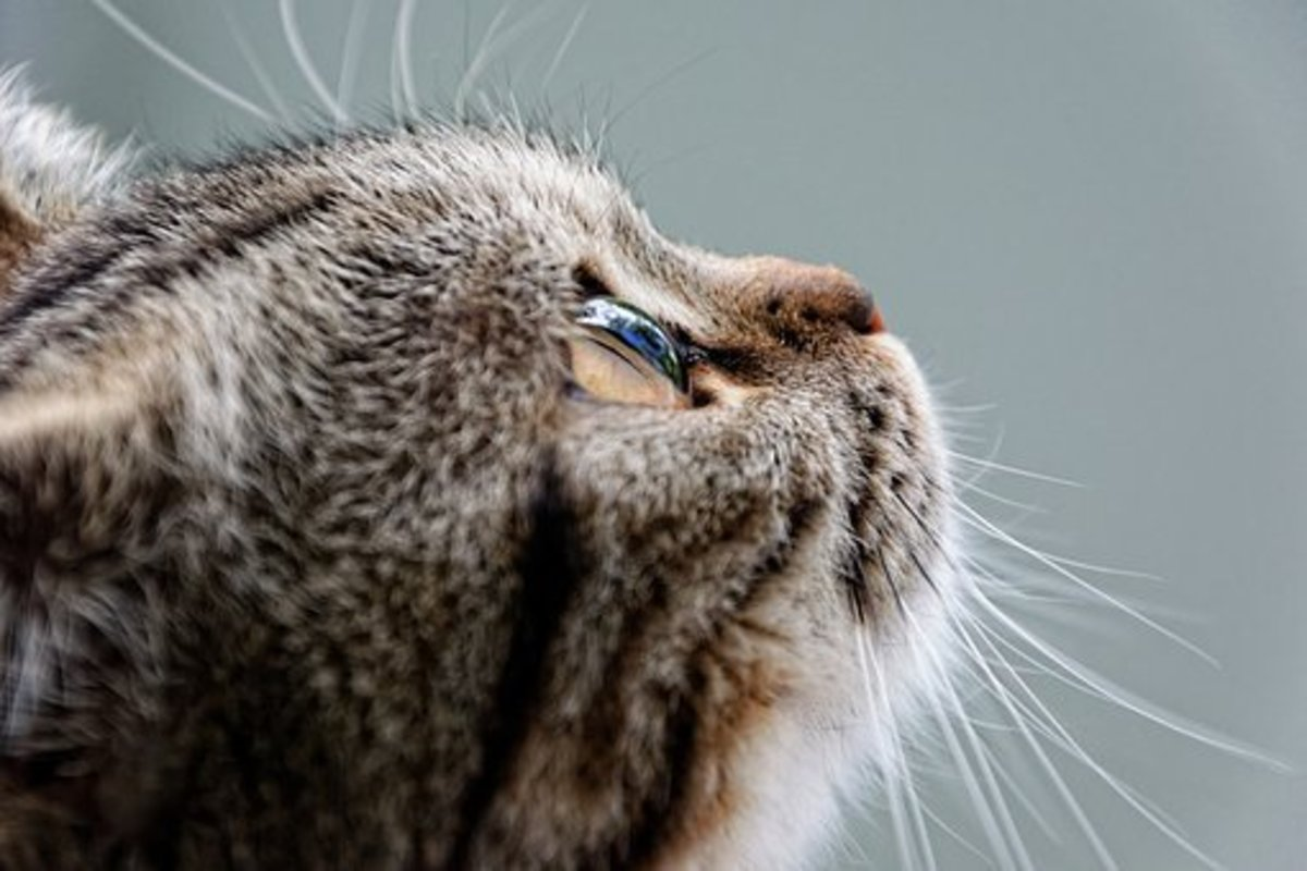 20 Great Names for Your British Shorthair Cat From British Literature, Mythology, and Folklore