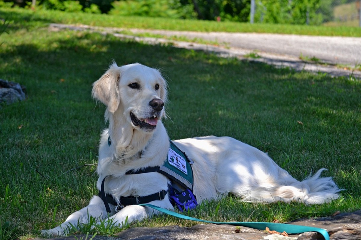 service-animals-emotional-support-animals-pets-and-the-law
