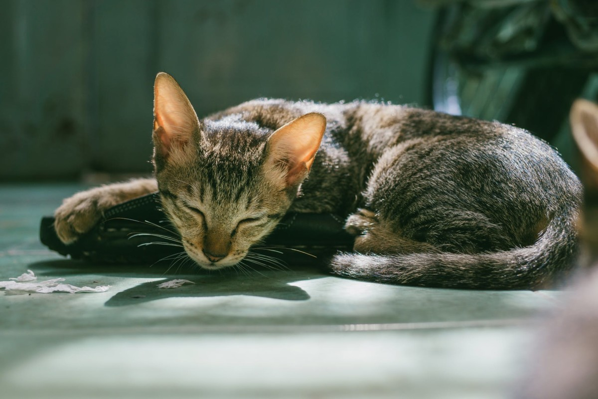 Cats often hide symptoms of illness.