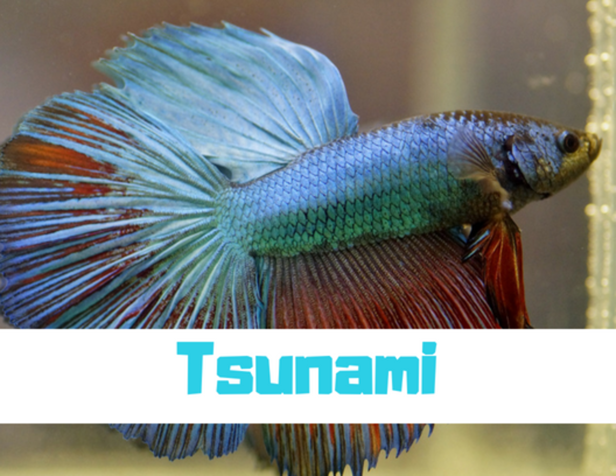 Some names work best for specific types of fish, like Tsunami for a Betta. Or Betta White, of course.