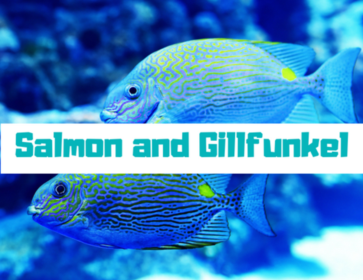 Got two fish that always stick together? Try out these funny, punny names.