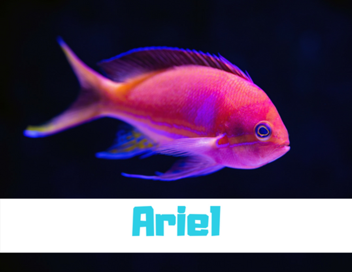 300+ Funny and Clever Fish Names | PetHelpful