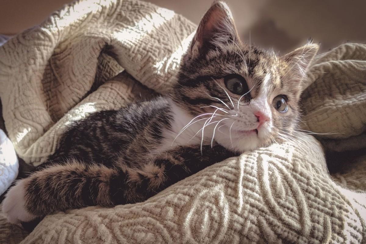 Cats love warm, fuzzy blankets.