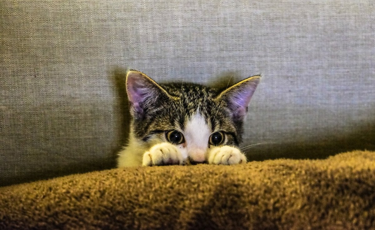 Your cat is always watching you, even when you don't know they are there.