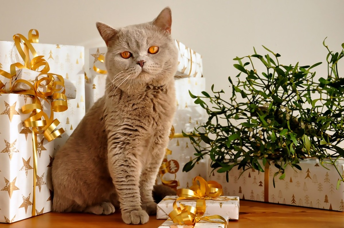 I didn't mean that kind of gift! Silly British Shorthair...