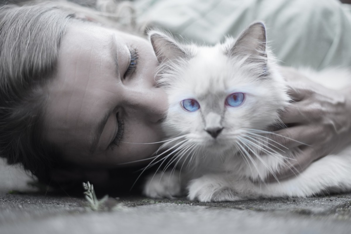 Cats can be just as affectionate toward their owners as dogs.