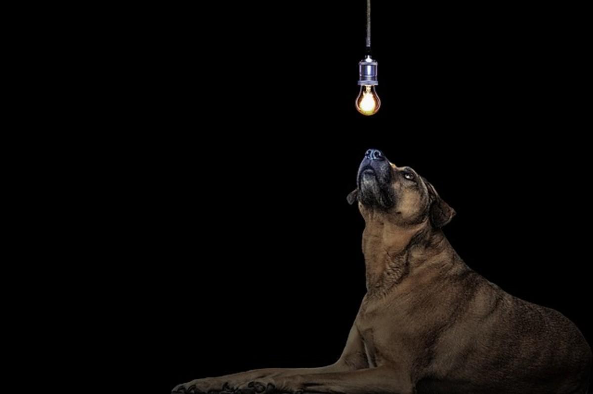 Dog looking at light bulb