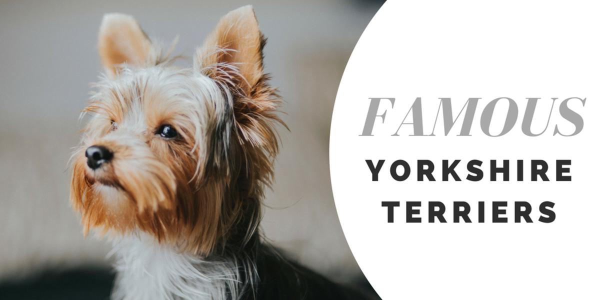 yorkie-names