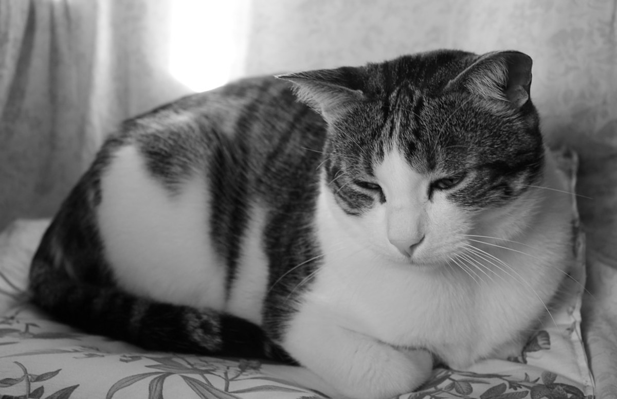 Depressed cats may sleep more than usual.