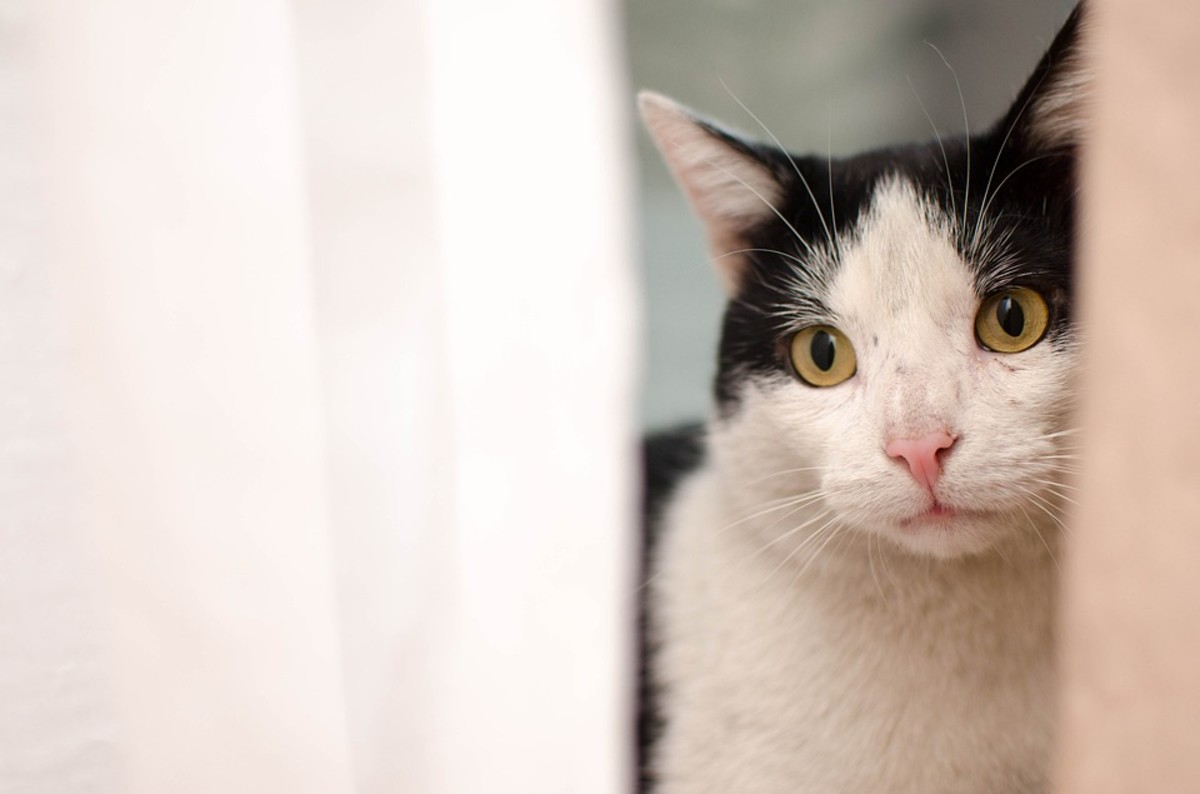 Depressed cats are also more likely to hide.