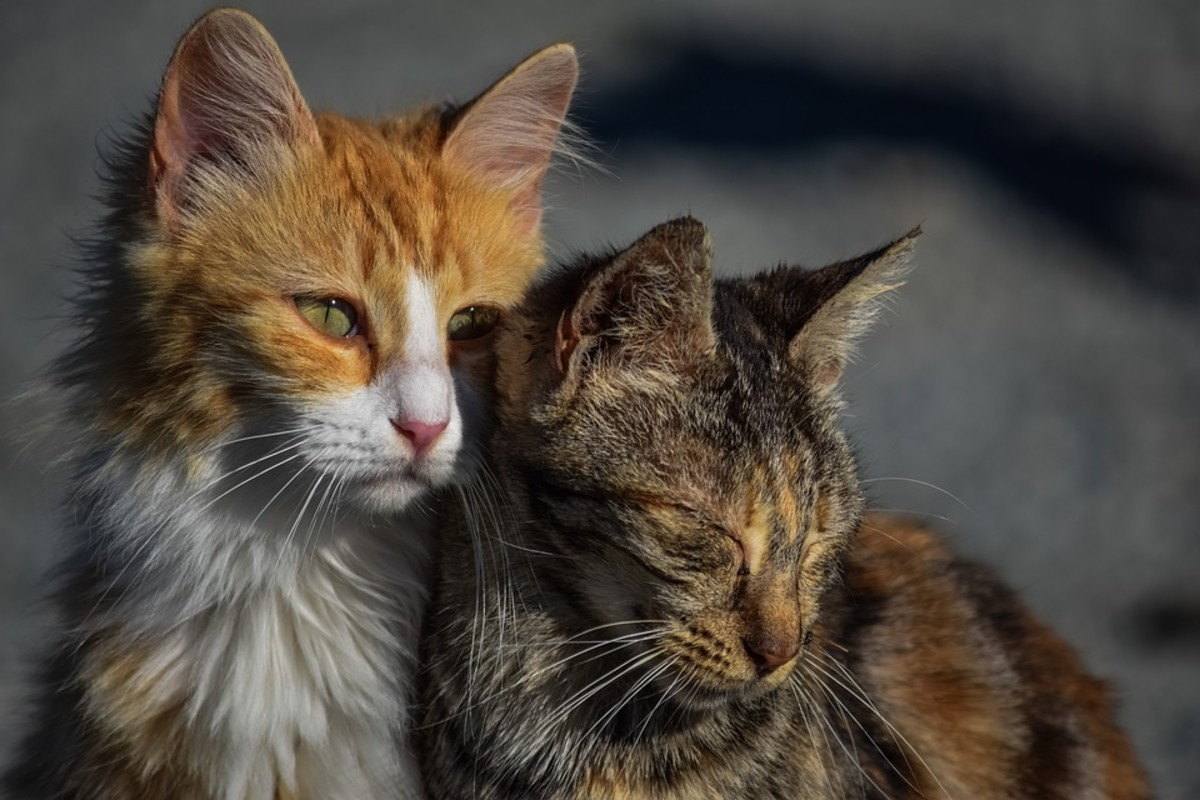 Cat's can suffer from depression, just like humans.