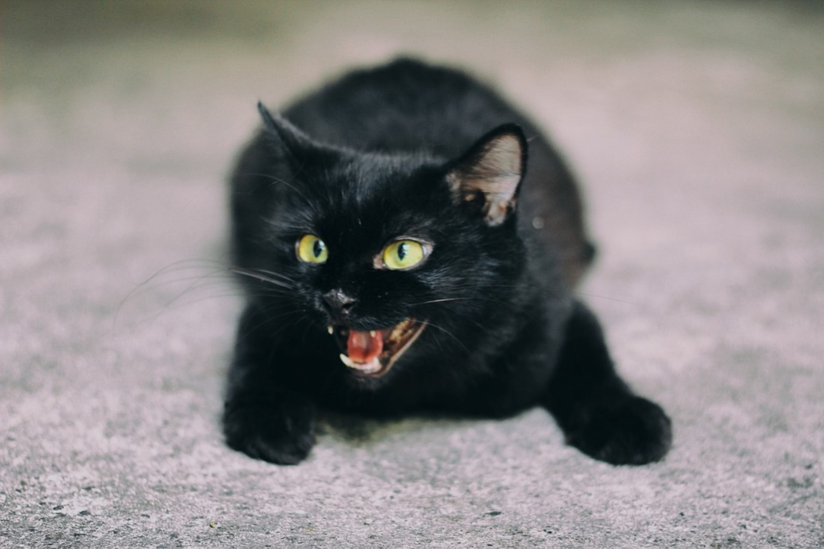 Sudden aggression may be a sign of depression in cats.