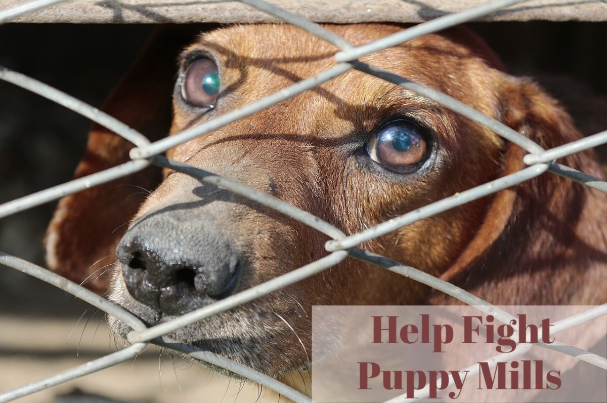 Fight Against Puppy Mills