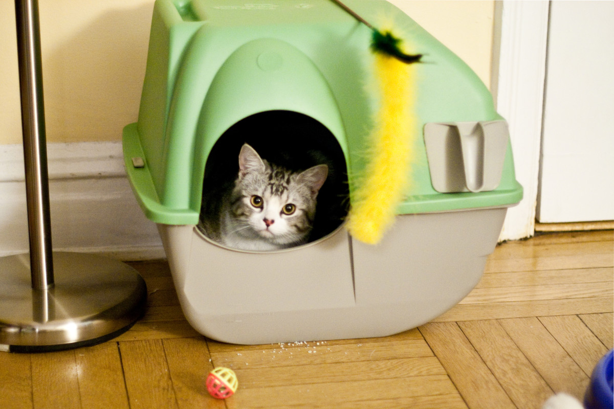 Litter box placement is important and plays a role in whether or not a cat is likely to use it.