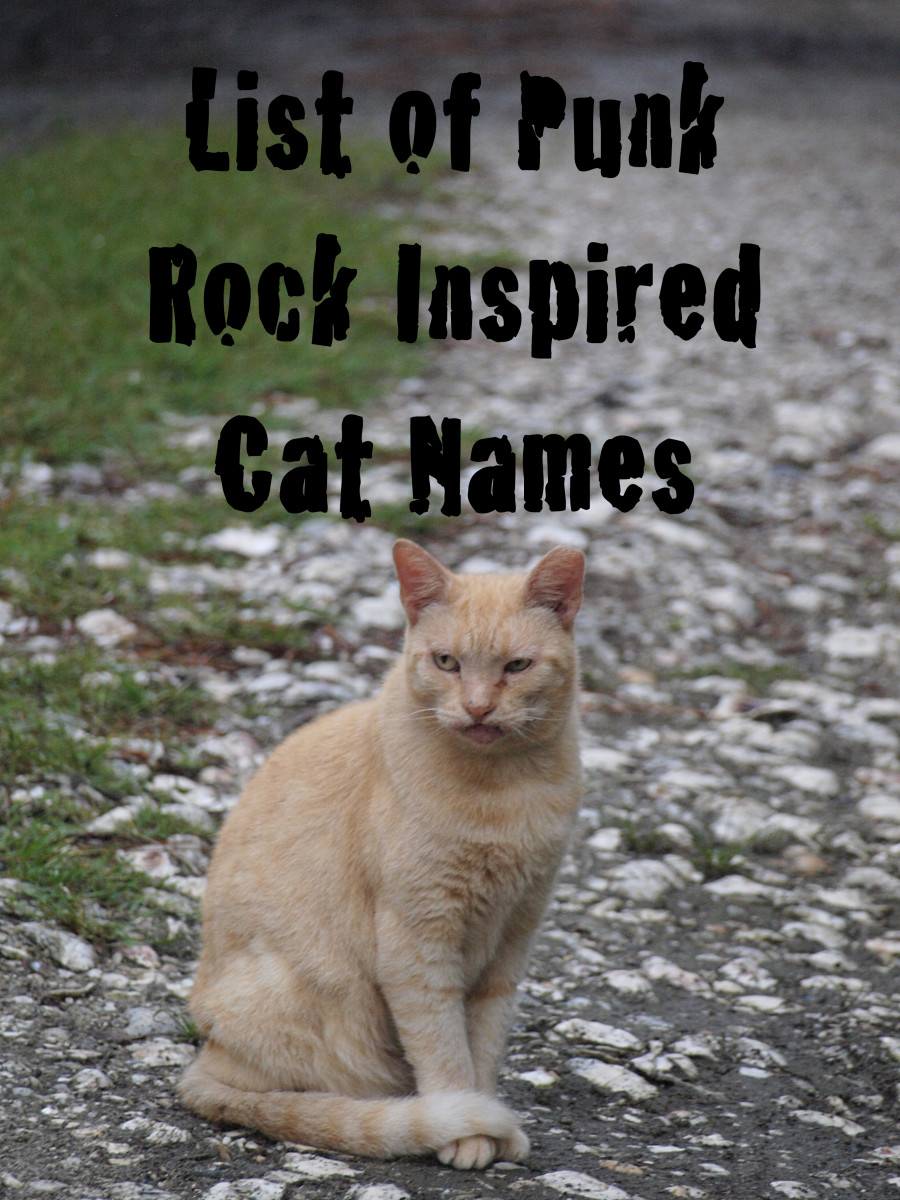 Lots of cats have a punk rock side, so if you are looking for some ideas for a name, check this one out.