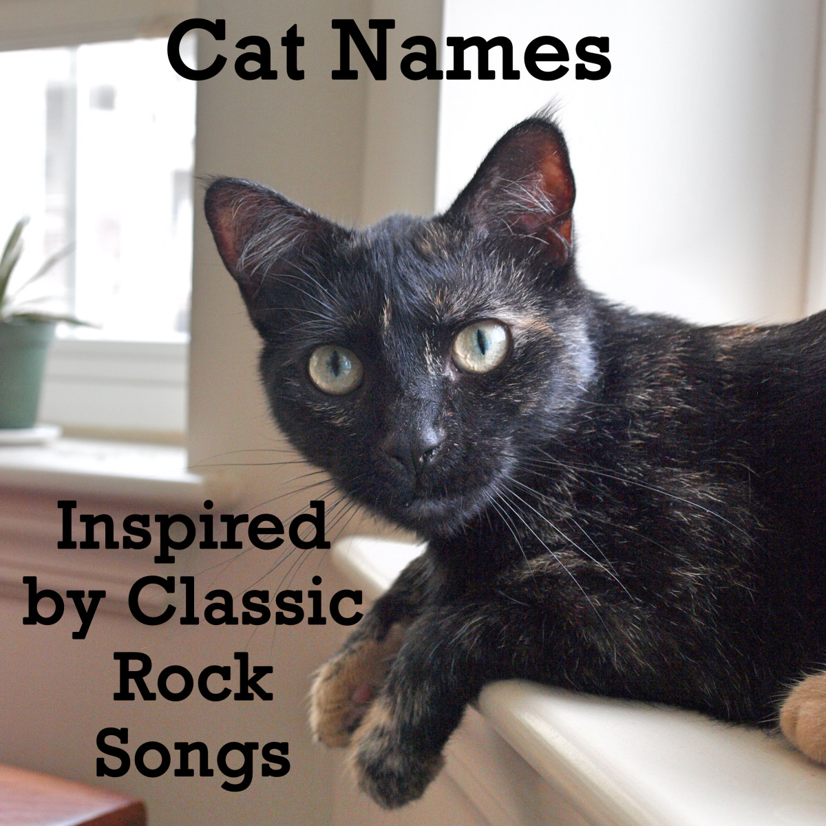 A classic cat deserves a classic rock kind of name.  Here's a list to get you inspired.
