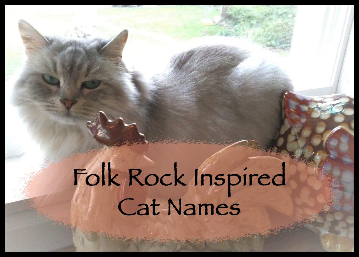 The soft sounds of folk rock have inspired many a name for a cat.  Here is a list of some of them.