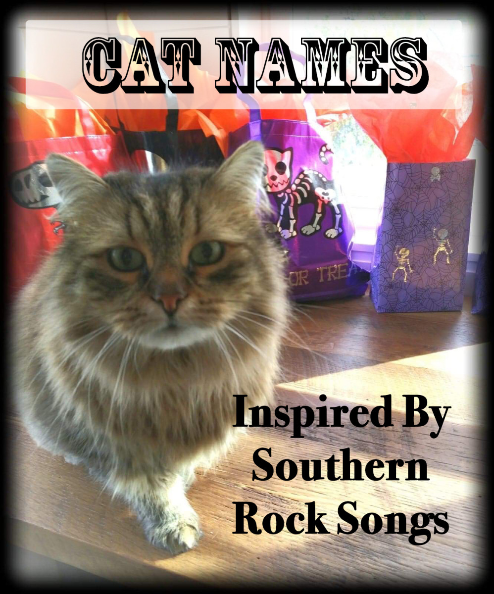 A southern belle deserves a good southern rock name.  If you have one of these cats then these names could be for you.