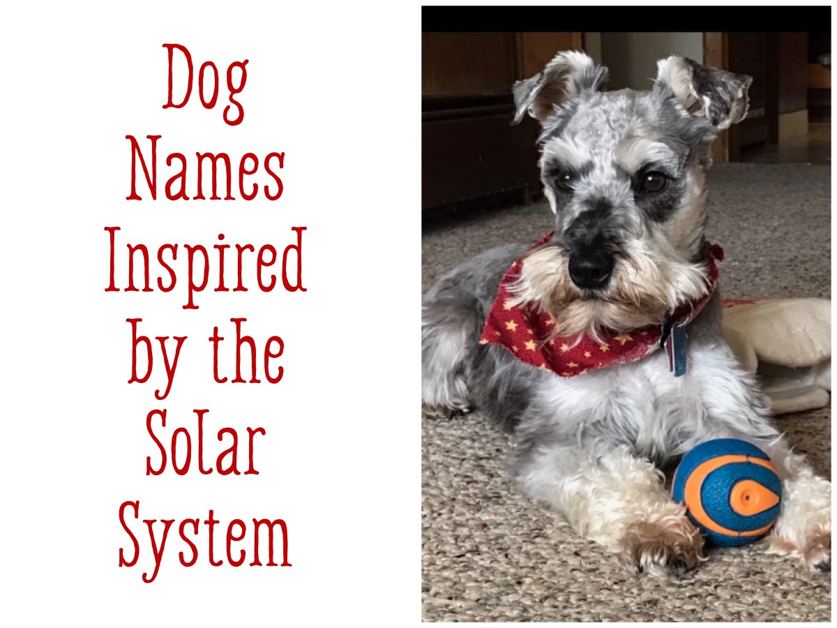 celestial-dog-names