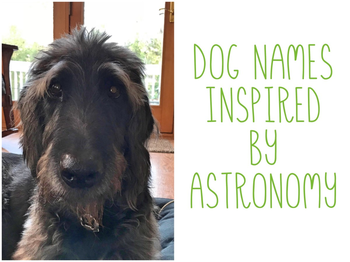 Astronomy names for pets