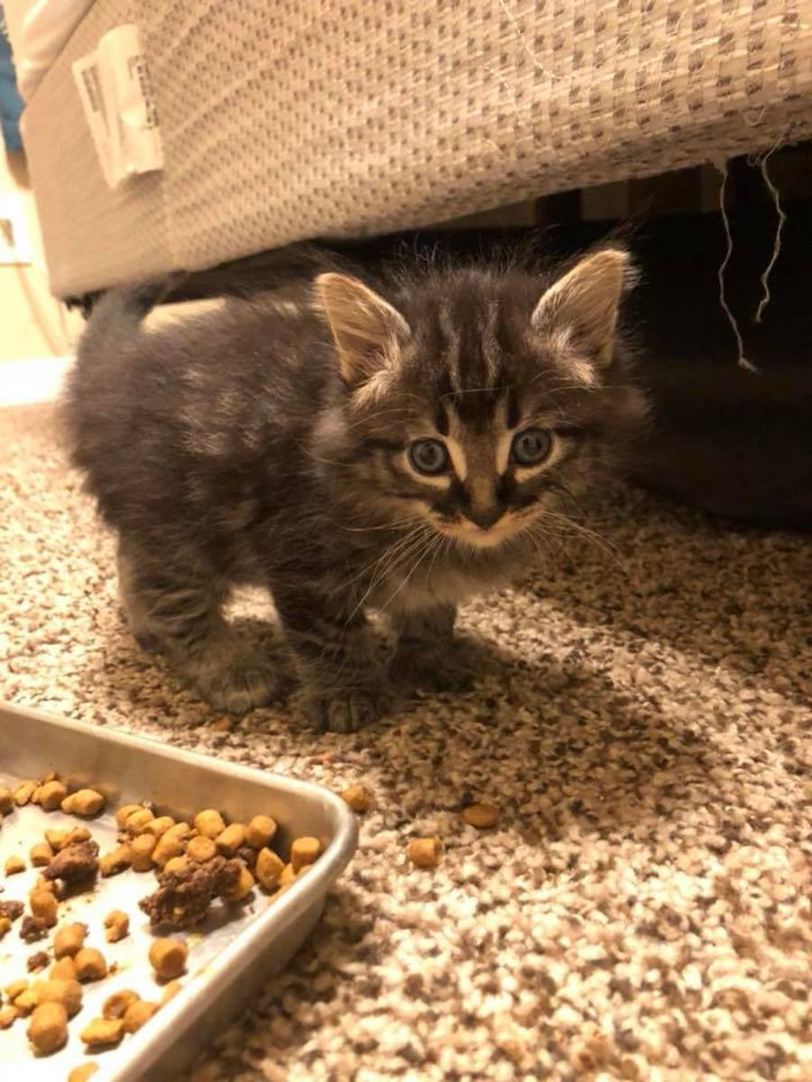 My foster kitten Spaz