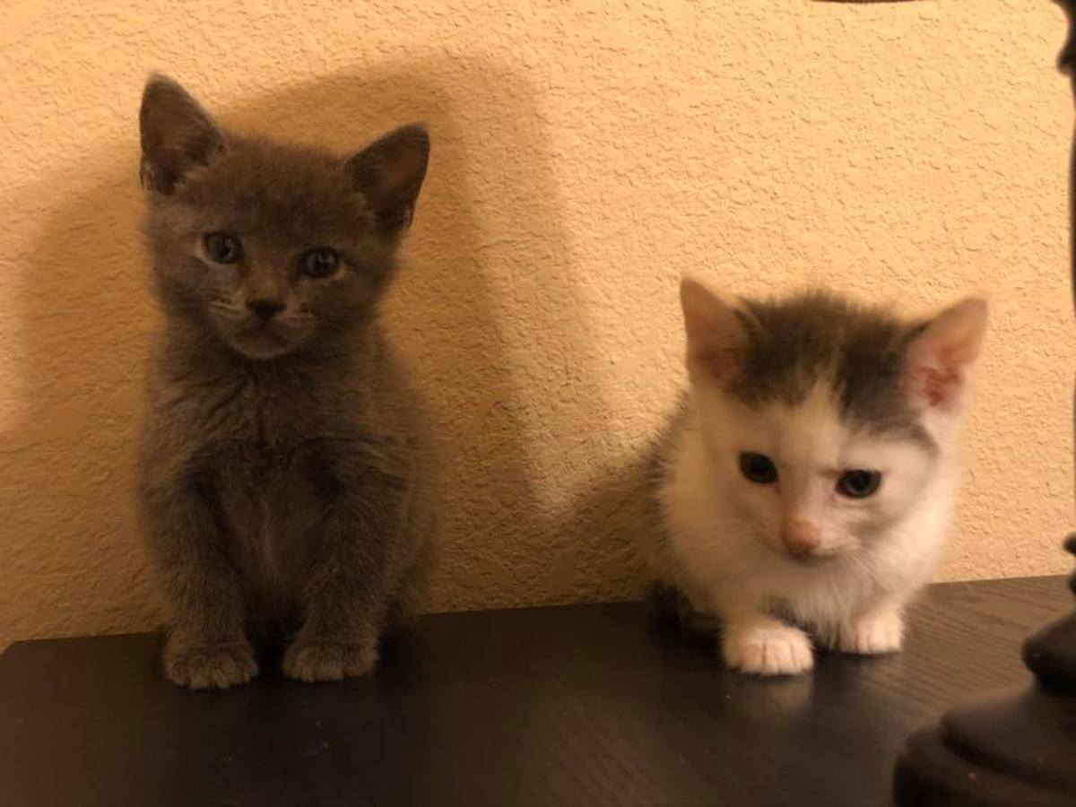 "Feisty Fosters ""Rick and Lucy"""