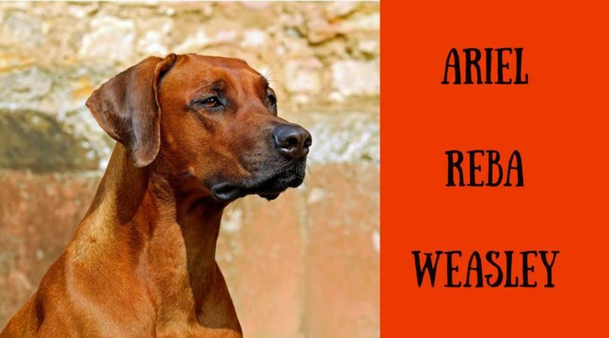 200+ Unique Red and Orange Dog Names | PetHelpful