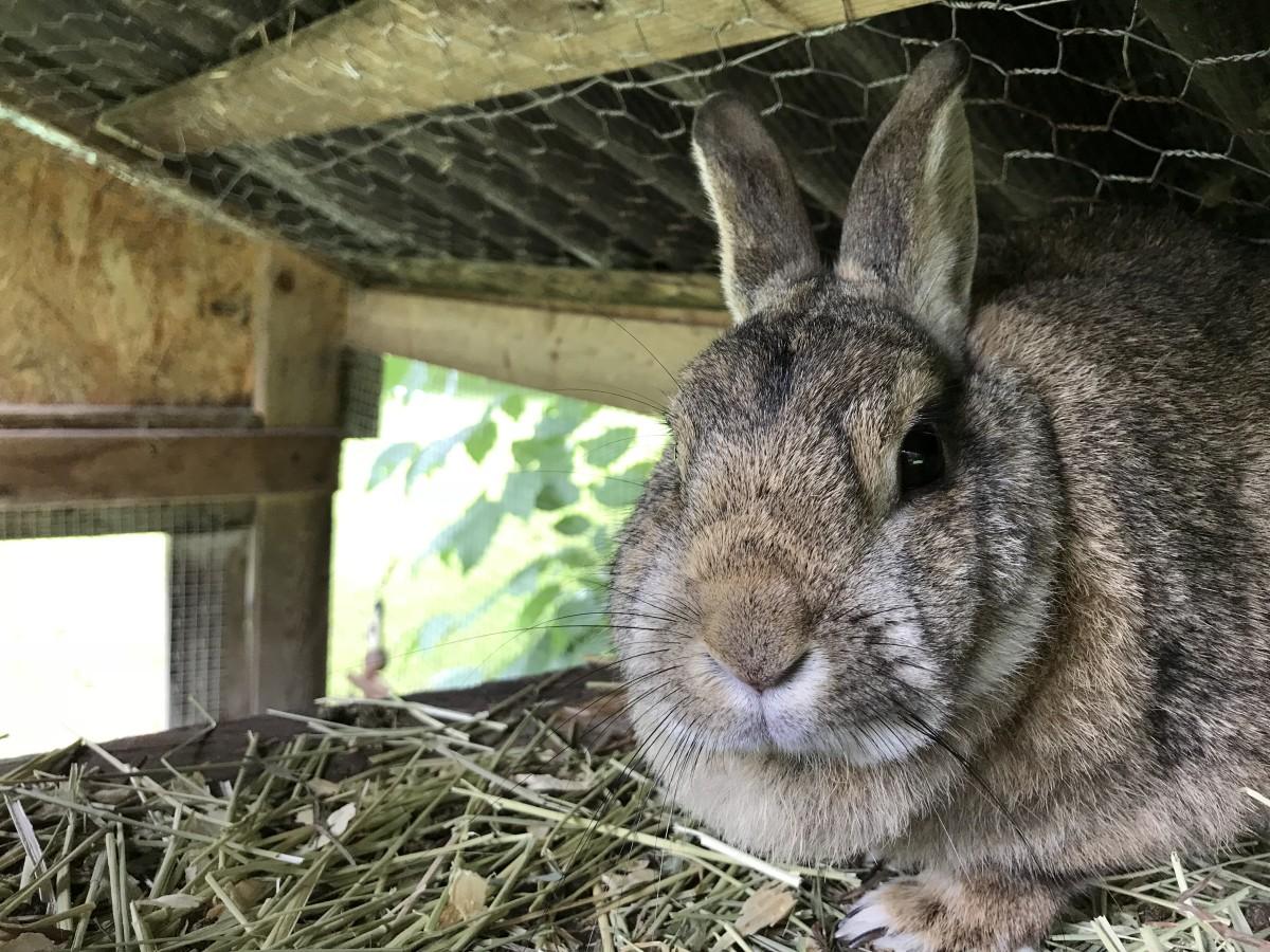 bunny-rabbit-names