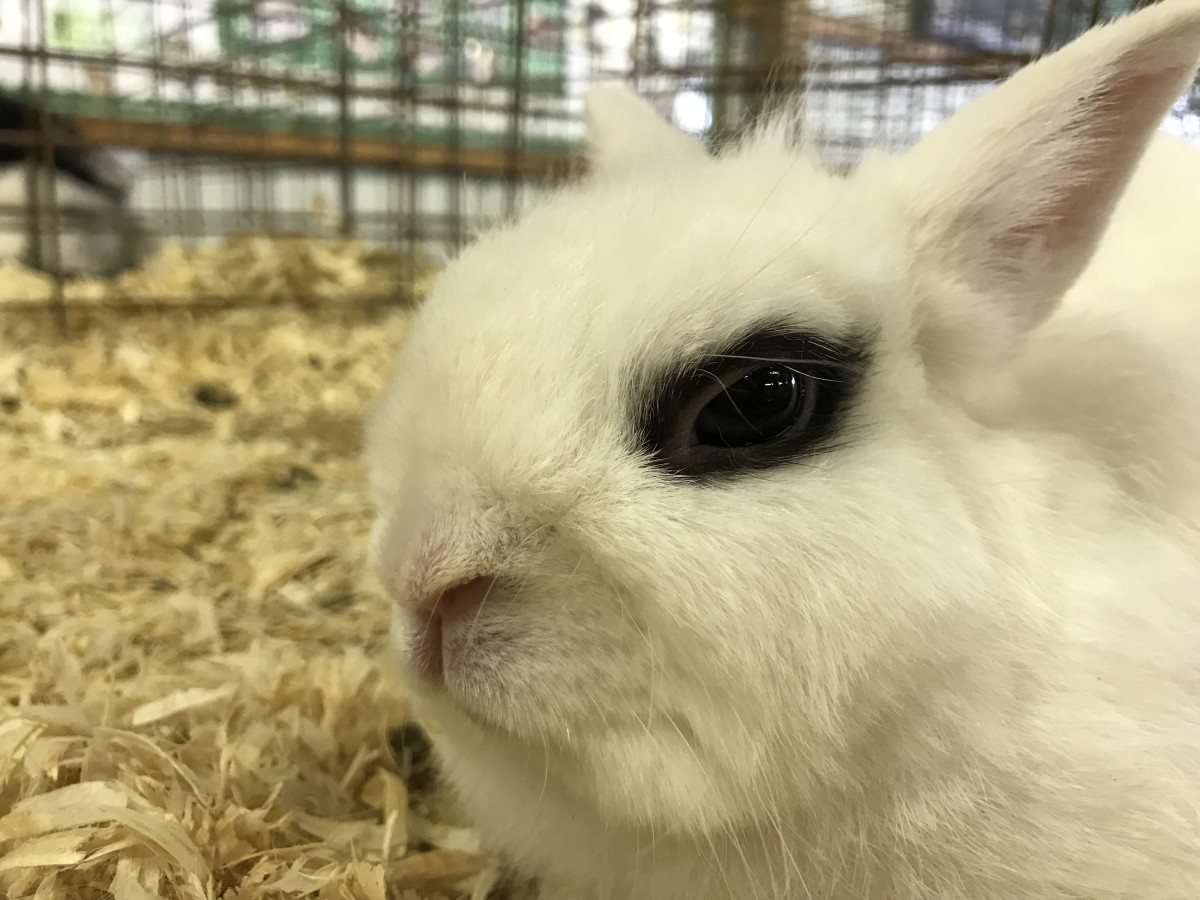 150 Cute And Funny Bunny Rabbit Names Pethelpful