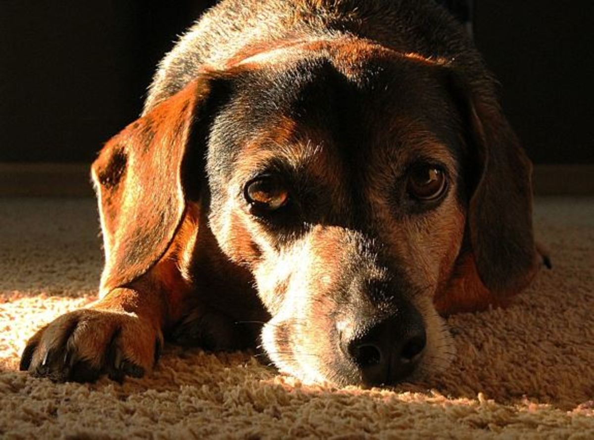 Different dogs process loss in different ways. Some may become lethargic while others might appear agitated.