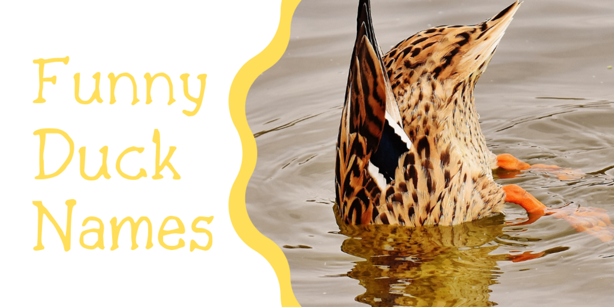 250+ Duck Names for Your Feathered Friend (From Aflac to Xerxes