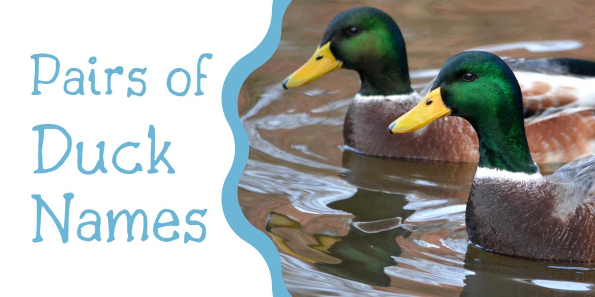duck-names