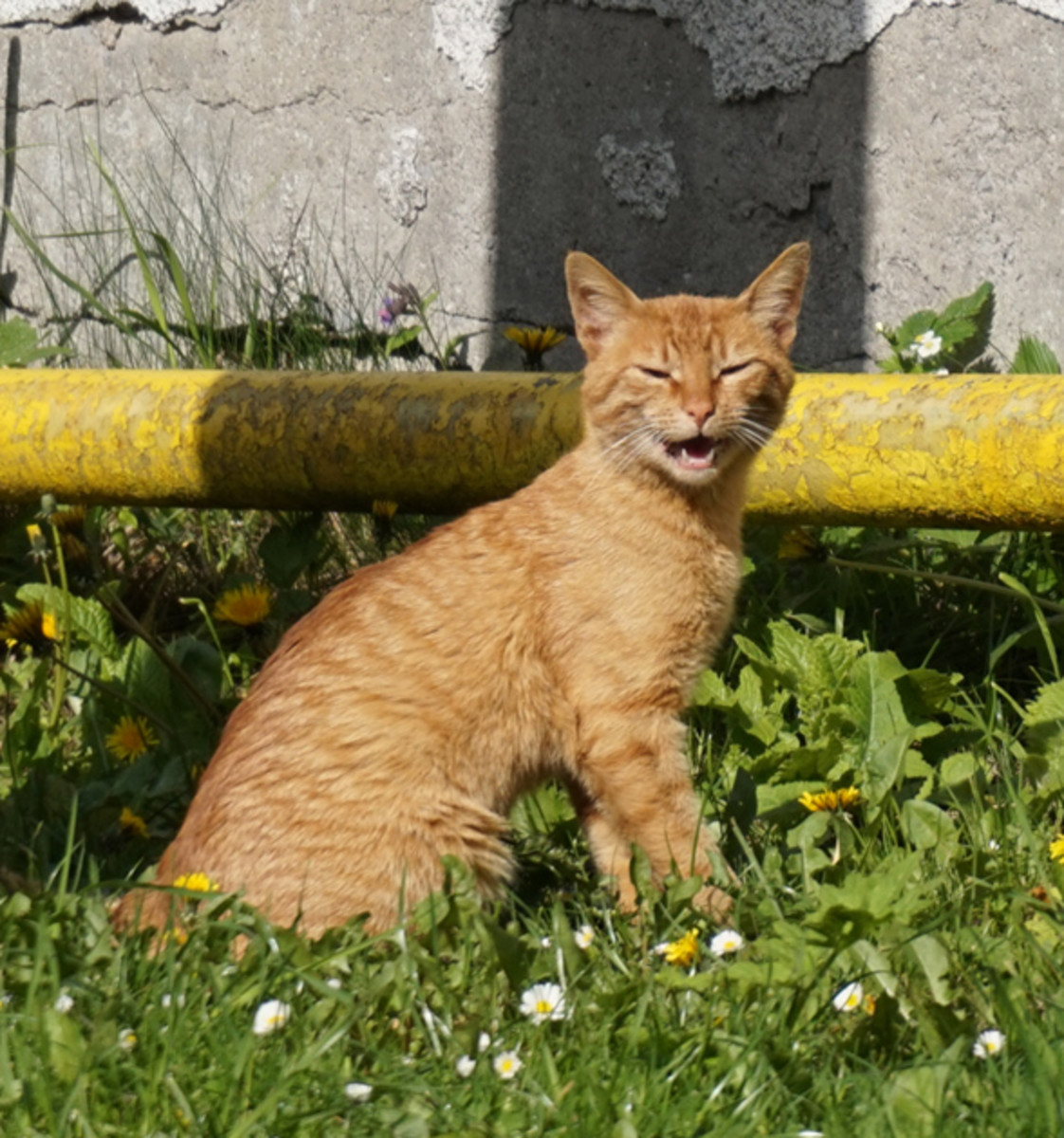 Watch For Signs of Overheating or Other Illness in Your Panting Cat